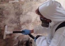 mold-remediation-contractor1